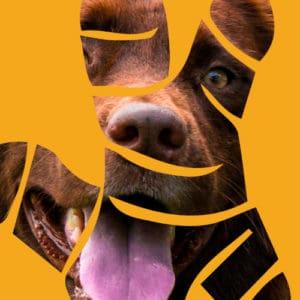 Turmeric Direct Canine