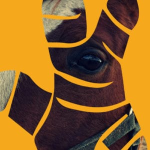 Turmeric Direct Equine